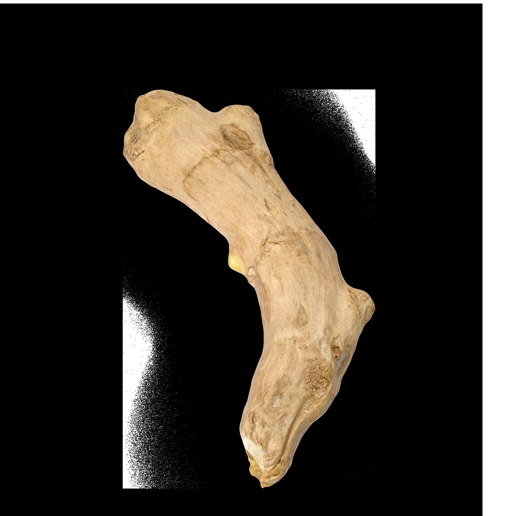 Ginger Root.C16.2k